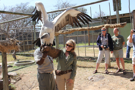 a Picture of Joany hand feeding a Vulture