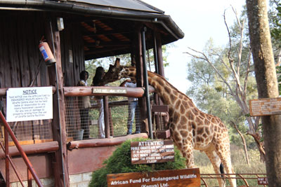 a Picture of The Langata Giraffe Center
