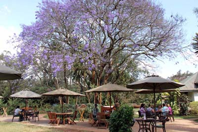 Picture of the Garden tables at Tamambo