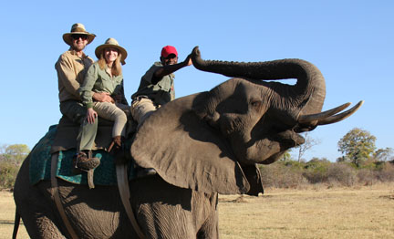 Picture of riding an Elephant while on a safari, in Victoria Falls, Zimababwe, Africa