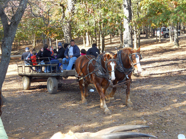 a Picture of the Horse Drawn Wagon Ride at the Lazy 5 Ranch